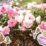 天然のバラの香水REFAN(レファン)ローズパフューム