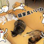 猫家具(猫ソファー)がかわいい【ふるさと納税】購入先はどこ?